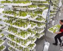 Takto bude vyzerať najväčšia VERTIKÁLNA farma na svete
